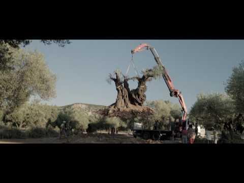 『オリーブの樹は呼んでいる』予告