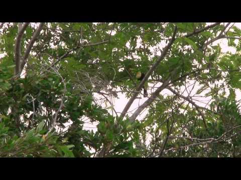 River Adventure & Belize Zoo