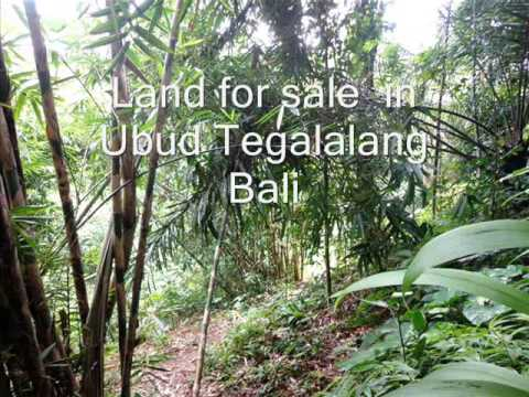 Land for sale in Bali, land for sale in Ubud Bali - TJUB225