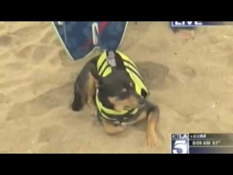 Surf Dog Abbie Sets Guinness World Record