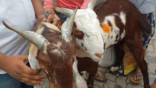 #Realprice DEONAR ki Dhoom (part 14) 18th August