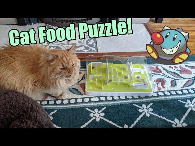 Parker vs Food Puzzle | Cat Food Puzzle | Parker The Cat