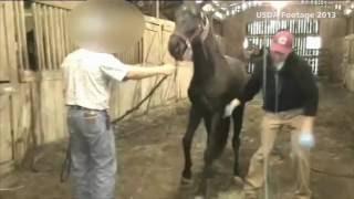 Video USDA inspections find horse soring cruelty download MP3, 3GP, MP4, WEBM, AVI, FLV Juli 2018