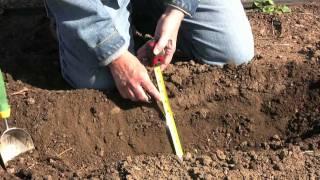 HOW TO PLANT ASPARAGUS, RHUBARB AND HORSERADISH