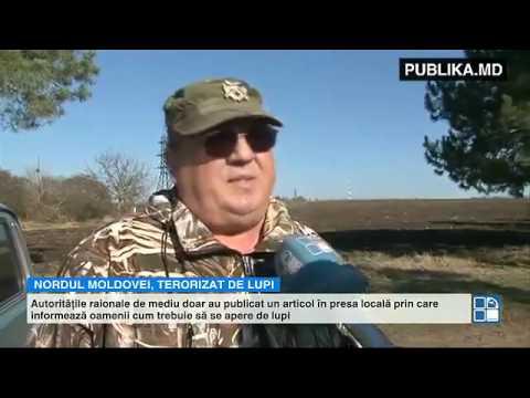 LUPII terorizează nordul Moldovei