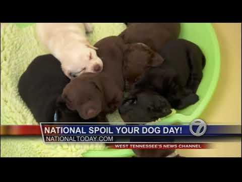 National Spoil Your Dog Day — WBBJDT3 08 10 2017