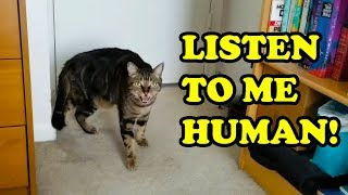 Cats Talking With Their Humans 2019 [NEW]