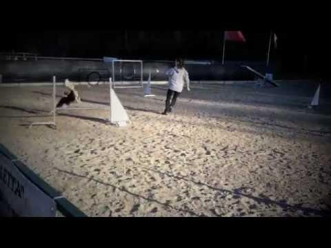 Lock-eye Chic agility training-Febbraio 2012