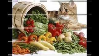 витамины для кошек как выбрать