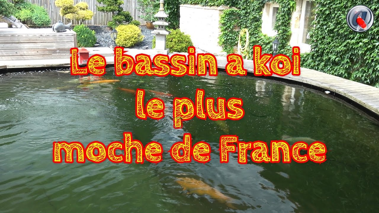 Le bassin a koi le plus moche de france youtube for Le prix des carpes koi