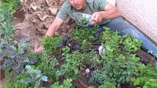 #1 Way to Save Money by Growing your Own Food at Home