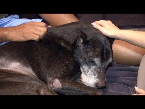 Vet brings peace to pets, families with in-home euthanasia