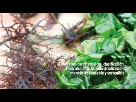 Cultura Culinaria Peruana - Completo (Edición y Comentarios CV)