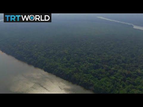 Amazon Conservation: Locals fight to preserve rainforest's wildlife
