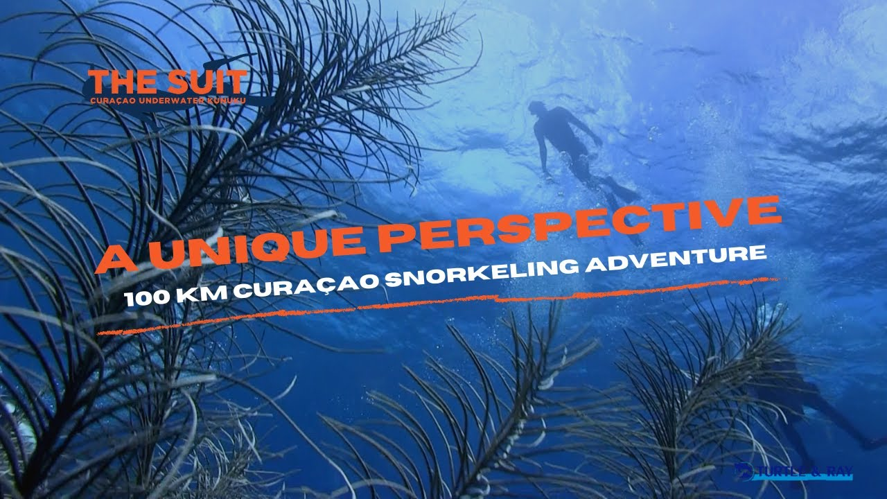 A unique Curaçao Snorkeling Adventure | The Suit Curacao
