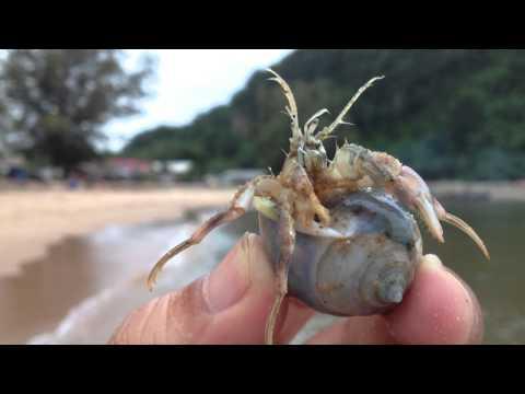 หอยฝากตัว ปูเสฉวน ทะเลบางเบิด น่ารักมากๆไปดูกัน