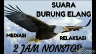 ReNew-SUARA MASTER BURUNG ELANG || eagle and its distinctive voice || #Eagle #Elang #EagleVoice