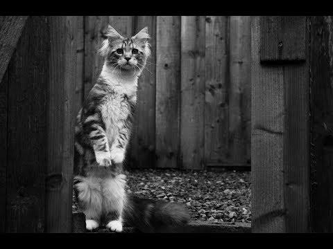 Понос у кошек и котят