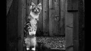 Что делать, если вы нашли бездомного котёнка? Часть 1