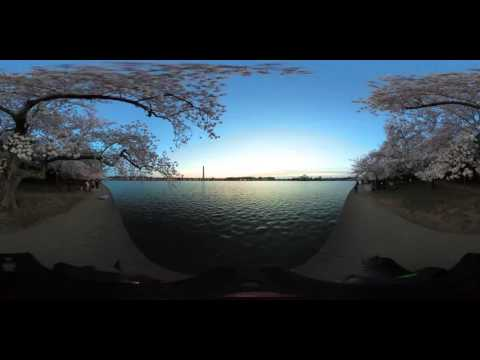 360° VIDEO: DC Tidal Basin sunrise during peak cherry blossom bloom