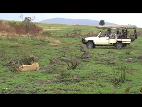A Guide to Safari Holidays in Kenya: Masai Mara, Amboseli and more