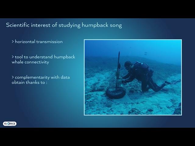 Présentation (en anglais) sur le chant des baleines
