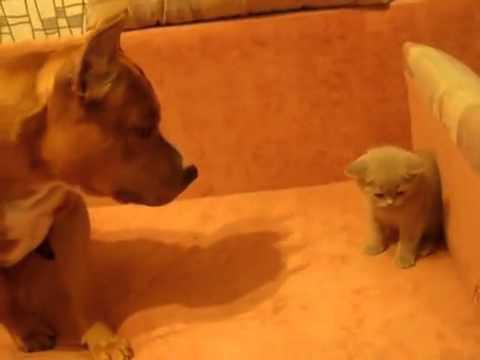 котенок знакомства