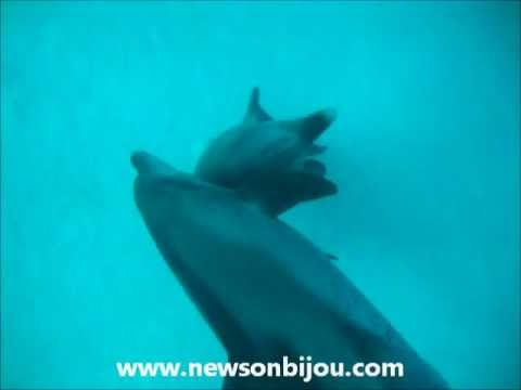 Dolphin Penis Video 46