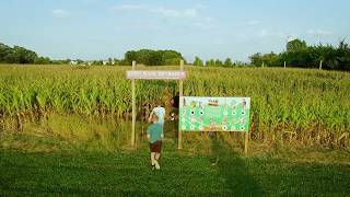 Abbey Farms #il200 Corn Maze!