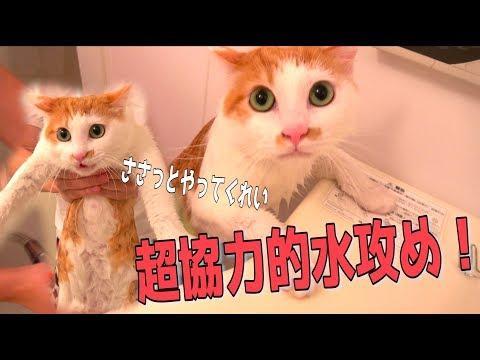 猫を捕まえたので洗ってみたらめちゃくちゃ協力的だったwww