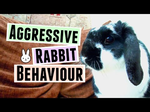 Aggressive Rabbit Behaviour: TIPS & FAQ | RosieBunneh