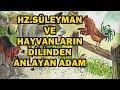 Hz Süleyman Ve Hayvanların Dilinden Anlayan Adamın Hikayesi mp3