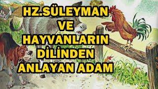 Hz. süleyman ve hayvanların dilinden anlayan adamın hikayesi