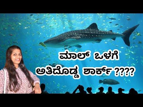 ದುಬೈ ಮಾಲ್ ಒಳಗೆ ಅತಿದೊಡ್ಡ ಅಕ್ವೇರಿಯಂ | kannada vlogs | Dubai Mall Underwater Zoo