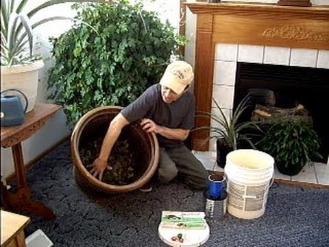 easy indoor composting anytime youtube