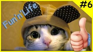 Приколы с котами Кошки в ванной и туалете | Fun'n'Life #6