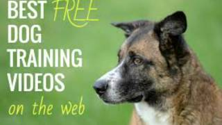 How To Train Your Dog - Advanced Dog Training Free Trial