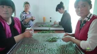 Тайпин Хоу Куй. Самый необычный зеленый чай Китая. Чайные фабрики(, 2017-06-19T10:18:24.000Z)