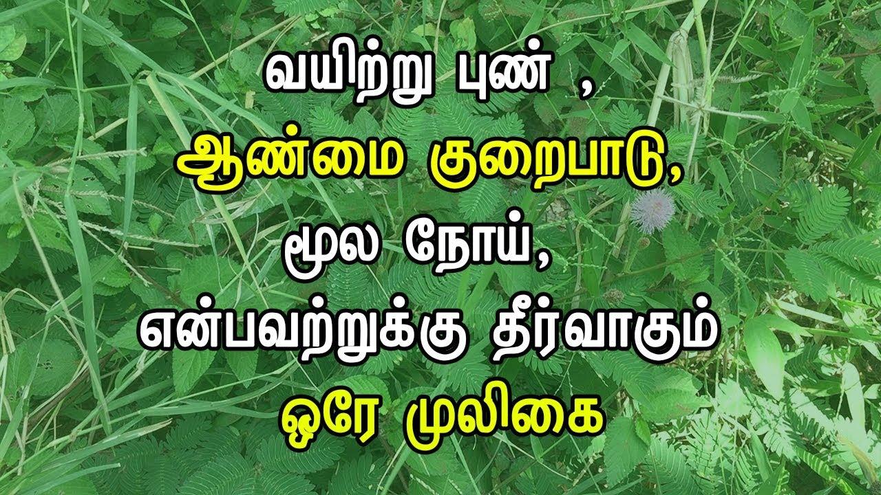 mooligai plants in tamil pdf download