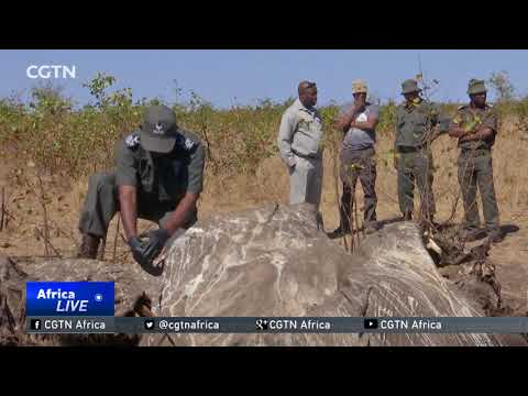 Elephant poaching on the rise in South Africa's Kruger National Park