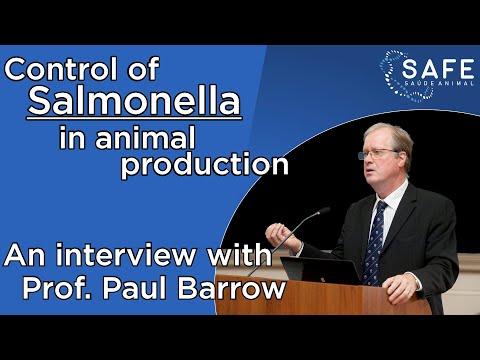 Entrevista com Prof. Paul Barrow sobre salmoneloses aviárias