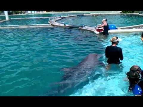 Dolphin Miami | Miami Seaquarium Dolphin Adventure Swimming With The Dolphins Youtube