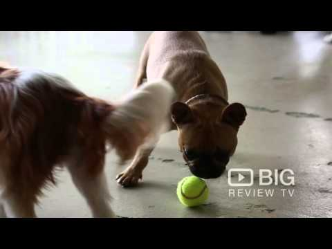 Dog Day Care Center | For Dogs Sake | Dog Care | Chippendale | NSW | Review | Content
