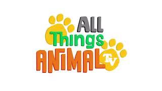 Animals for children - black bear for kids. Animals for kids