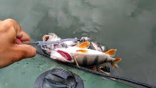 Вот это раздача Бешеный клёв окуня Рыбалка на спиннинг 2021