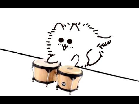 bongo dog
