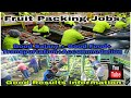 Urgent Requirement // Fruits Packing Jobs// Good Salary// Good Facility// Live Results+Information//