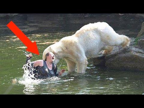 When Polar Bears Attack