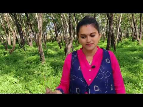 jiya-dhadak-dhadak-jaaye-cover-song-by-swathi-bhat