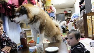 dog and children scrambled for the toy. 最近は玩具の奪い合いが多い...